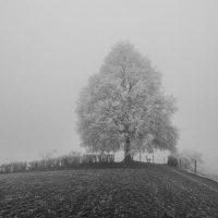 schneeluft