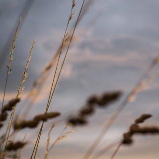 voll grass